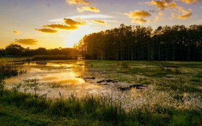 The Most Beautiful Places to Visit in Louisiana